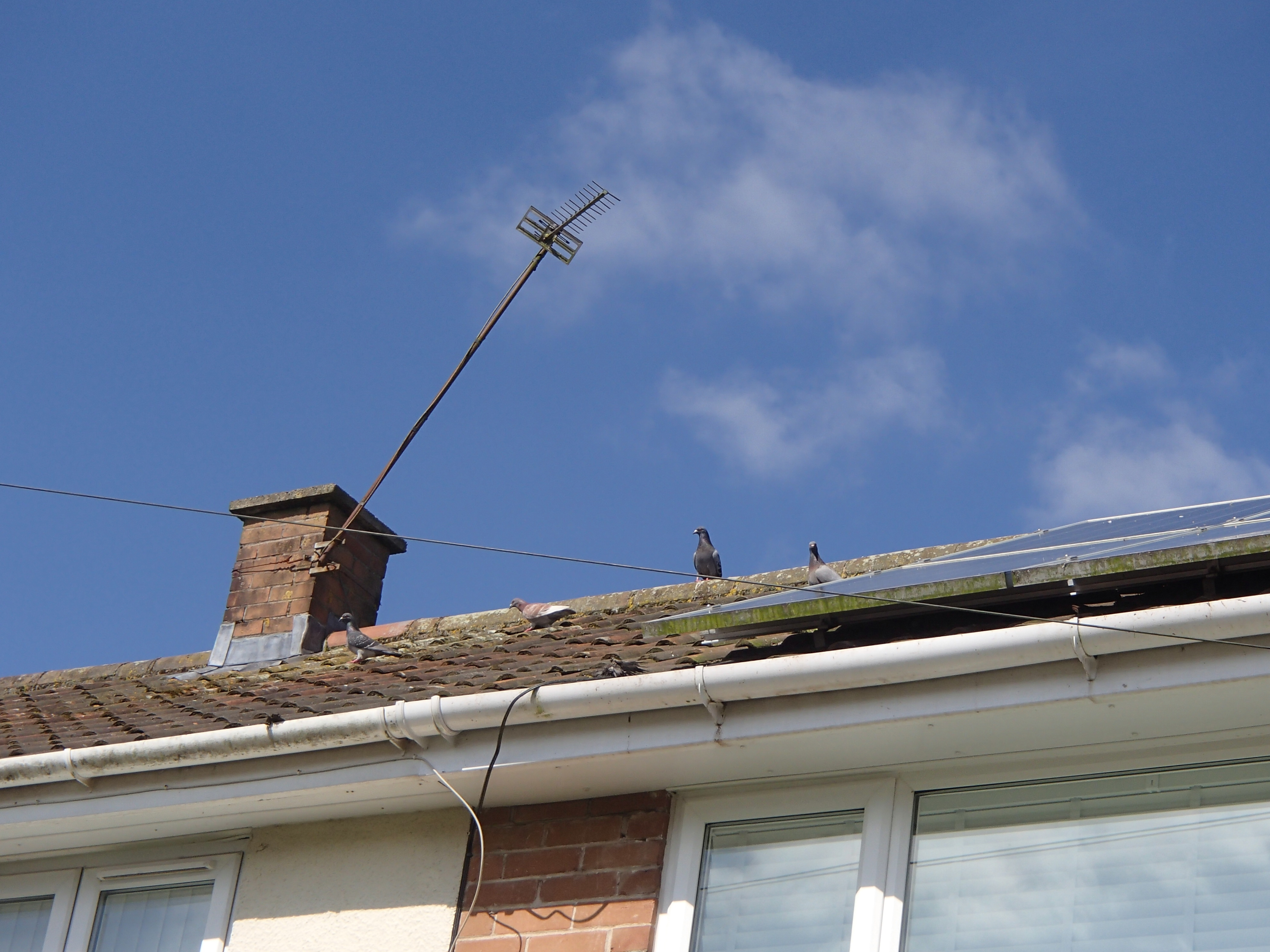 proofing solar panels from pigeons_1