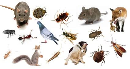 Pest Control Cardiff