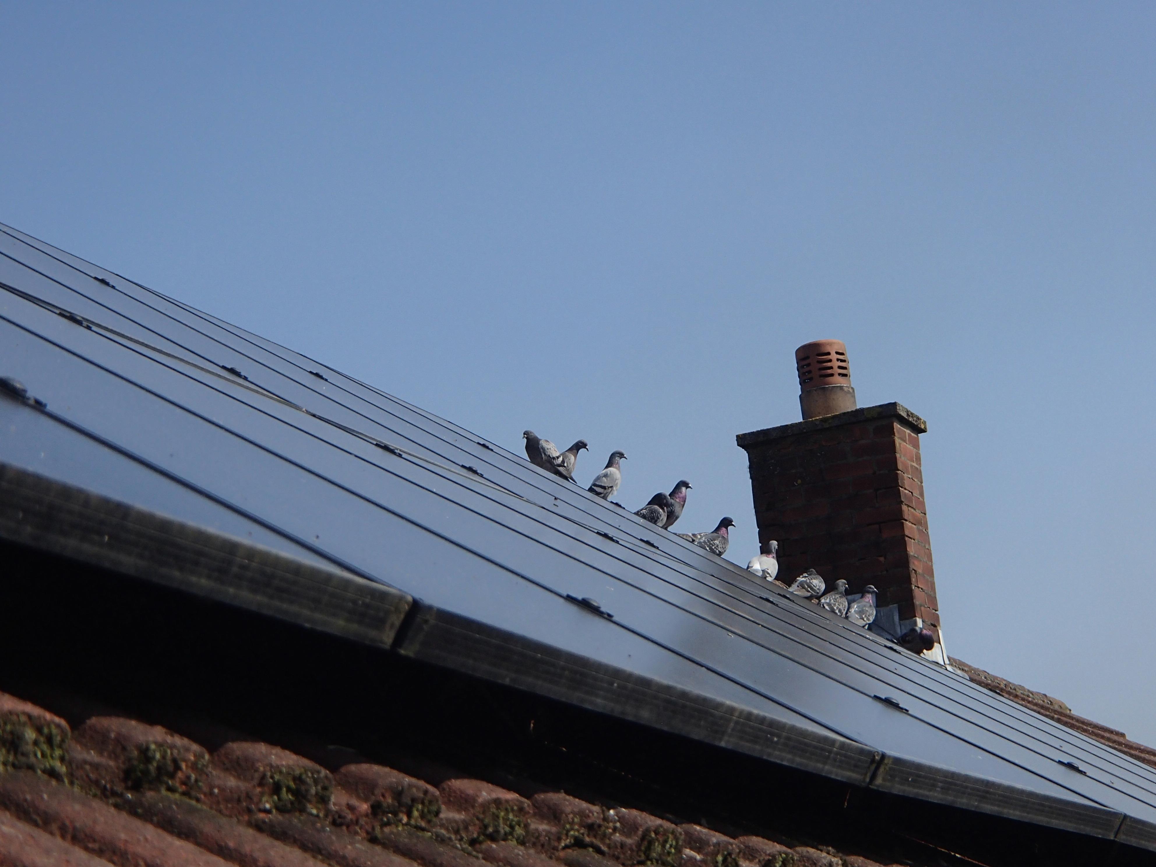 Solar Panel Pigeon Spikes_1