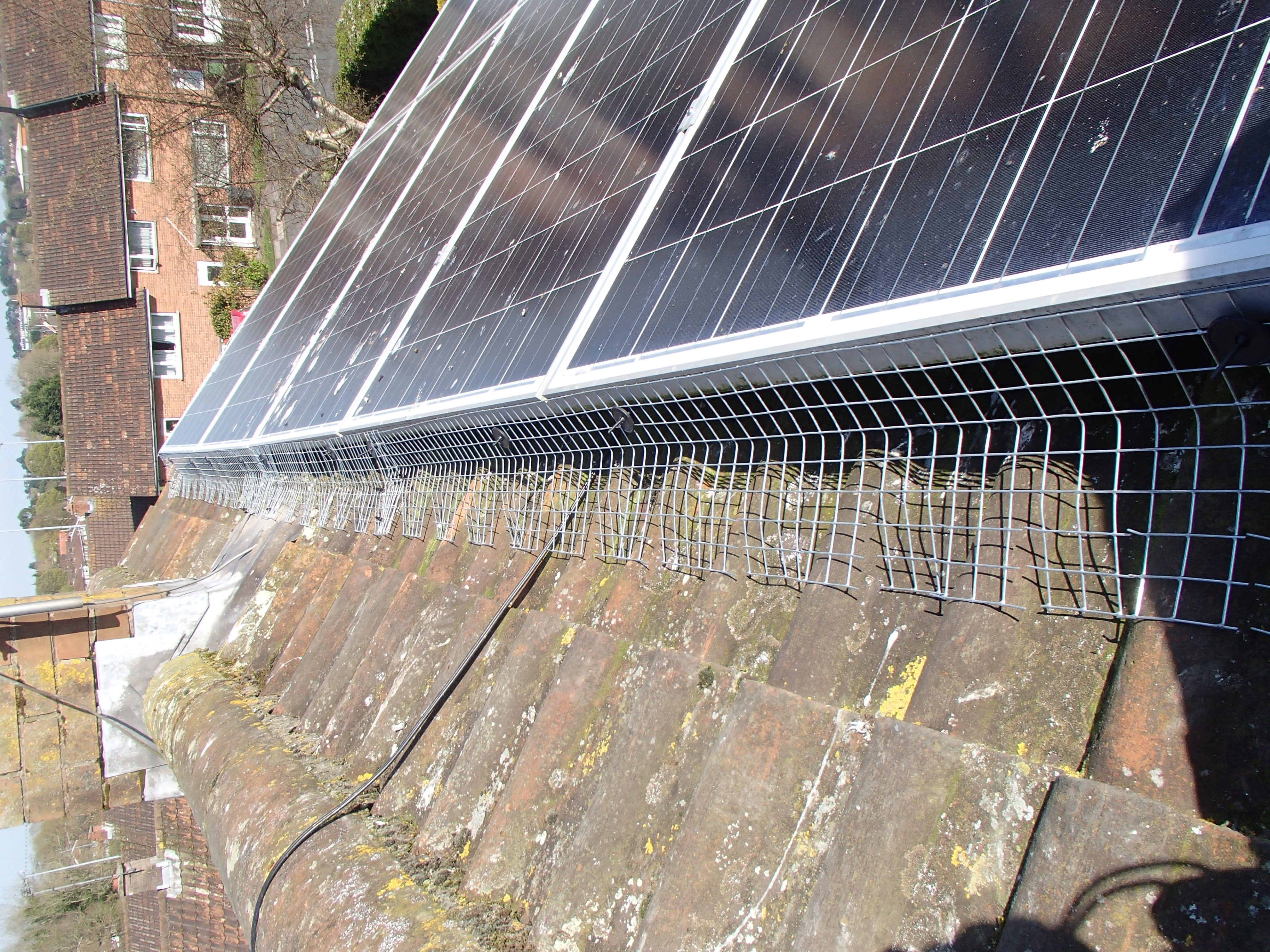 proofing solar panels from pigeons_3